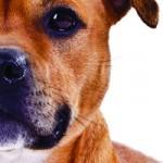 Kamphundsbokenfront